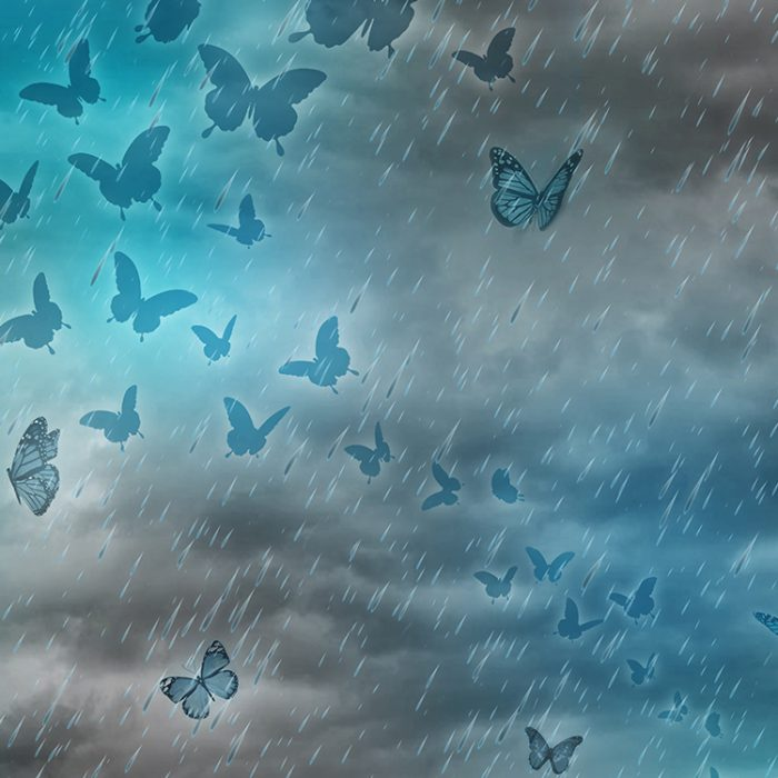 Fog Shipp Butterflys_1500x1800_750x750_III